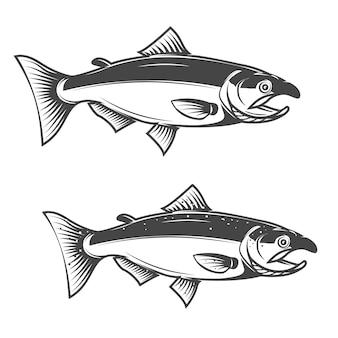 サーモンの魚、白で隔離