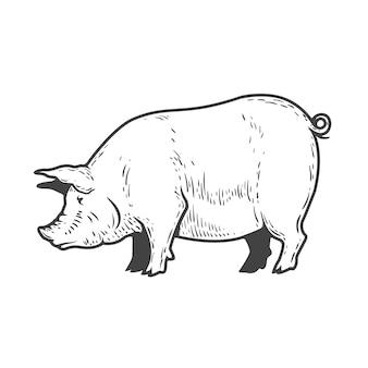 白い背景の上の豚のイラスト。ロゴ、ラベル、エンブレム、記号、メニューの要素。図。