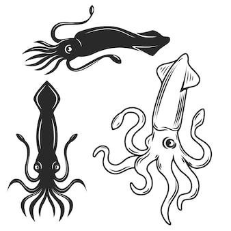 Комплект иллюстраций кальмара на белой предпосылке. элементы для, этикетки, эмблемы, знака, торговой марки.