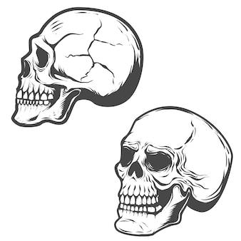 白い背景の上の頭蓋骨のセットです。