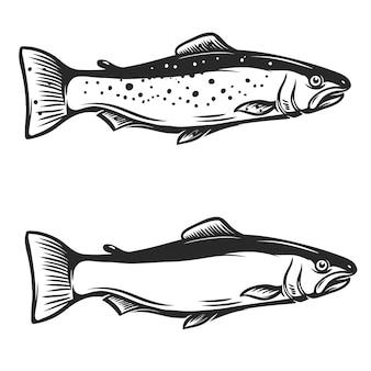 白い背景のマス魚イラスト。ロゴ、ラベル、エンブレム、記号の要素。図