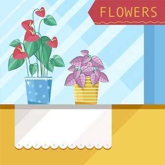 Красивые комнатные растения рядом с окном