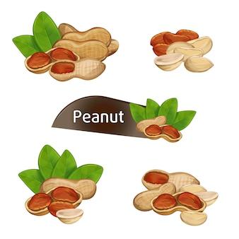 Ядро арахиса в ореховой скорлупе с набором листьев