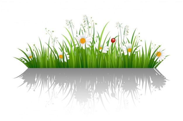 Зеленая трава границы с тенью