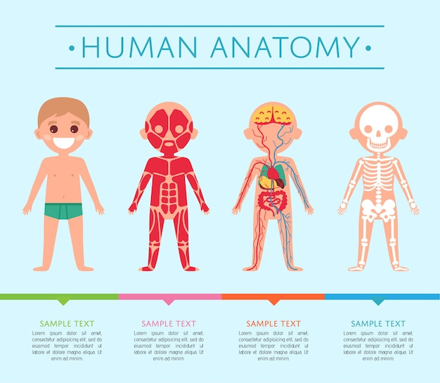 Шаблон анатомии человека с ребенком