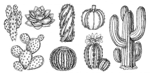サボテンのスケッチ。手描きのエキゾチックなメキシコの多肉植物のアイコンのコレクション。刻まれた砂漠のサボテンスケッチボタニカルイラスト