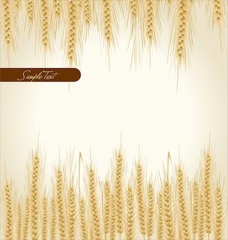 小麦の背景