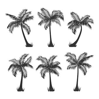 Кокосовые пальмы силуэт на белом
