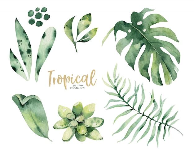 手描き水彩の熱帯の花と葉。エキゾチックなヤシは、植物学の要素と花を残します。アロハコレクション。
