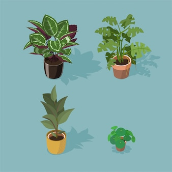 Изометрический набор из четырех растений