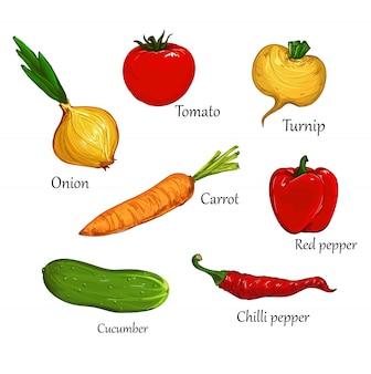 手描きのトマト、赤唐辛子、赤唐辛子、タマネギ、カブ、ニンジン、ベクトル設定図野菜