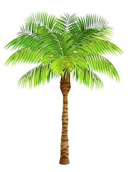 ココヤシのヤシの木。植物、庭、リゾート。自然の概念。