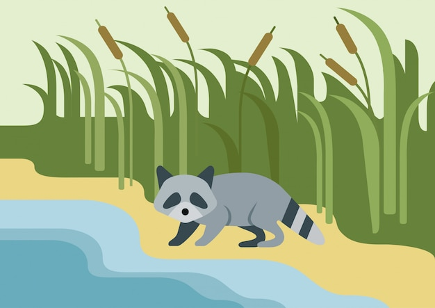 Енот плоский мультяшный, дикий зверь на берегу реки.