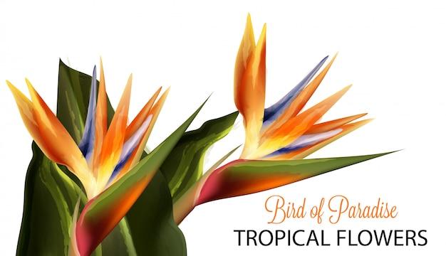 楽園の鳥の花の水彩画