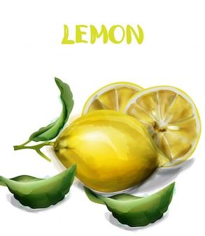 レモンの孤立した水彩画