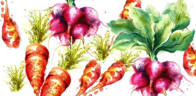 Морковь и редька акварель
