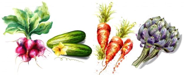 Акварельная коллекция овощей