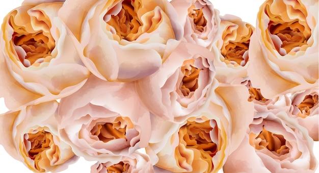 バラの水彩画のバナー