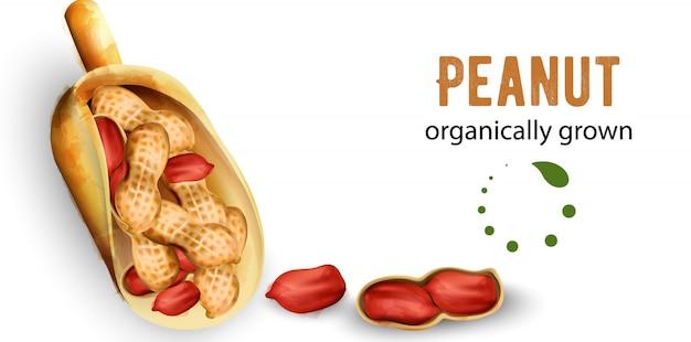 水彩風の有機栽培ピーナッツ