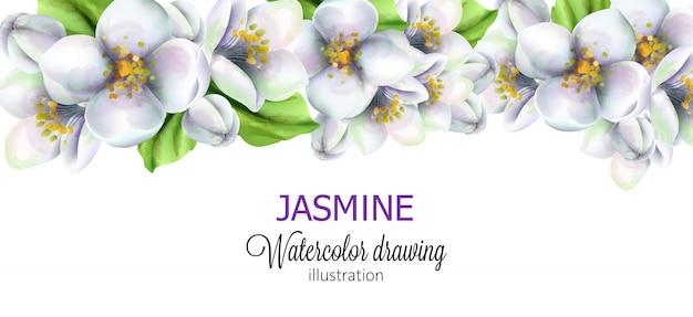 Жасмин акварельный рисунок с цветами на вершине