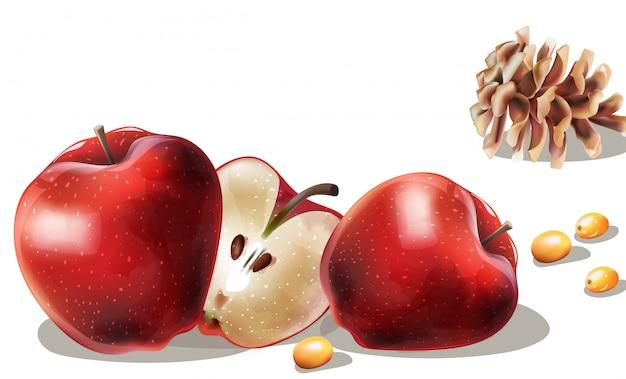 リンゴのスライス、黄色の果実、針葉樹の円錐形