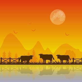 夕暮れの牛のシルエット