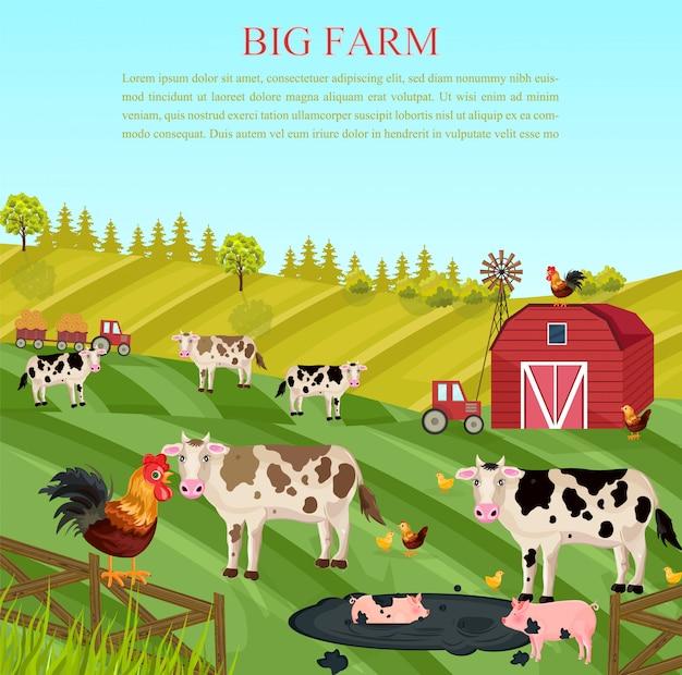 農場で牛と豚の動物