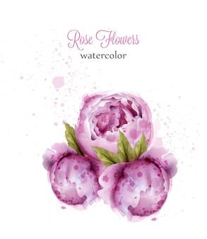 Акварель розовые дикие розы