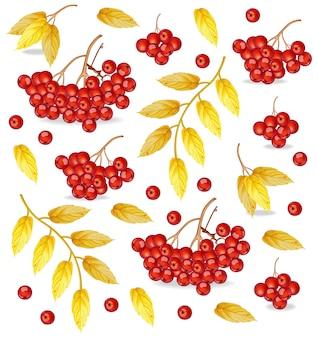 秋のローワンの果実