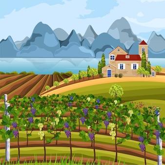 ぶどう栽培の収穫と山々