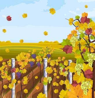 ぶどう園の秋の背景
