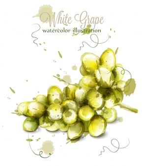 白い葡萄の水彩