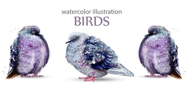 ピジョン鳥の水彩画