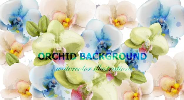 蘭の花の水彩の背景