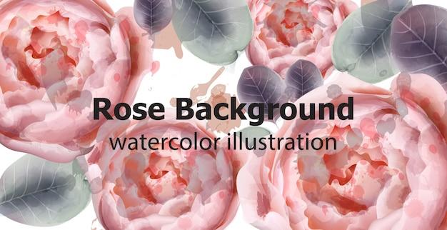 牡丹の花の背景の水彩