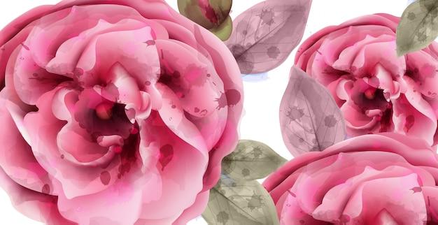 ピンクのバラの水彩画の背景
