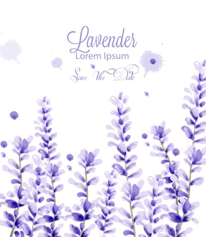 ラベンダーの水彩画カード