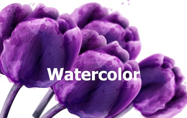 紫チューリップの花の水彩画の背景