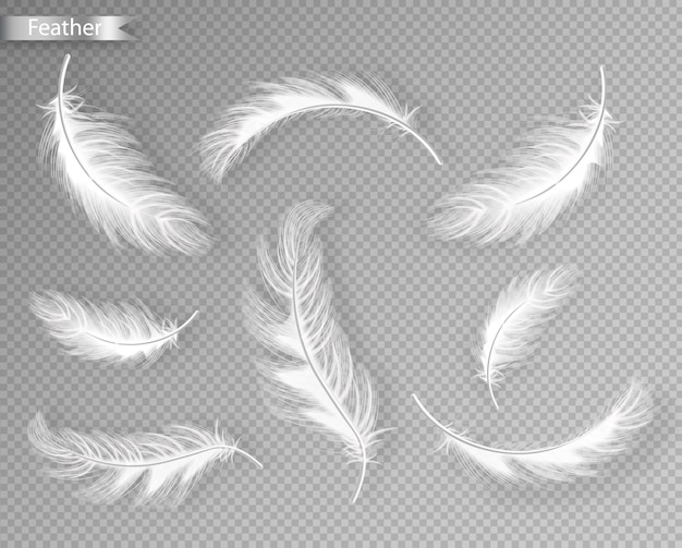 Коллекция белых перьев
