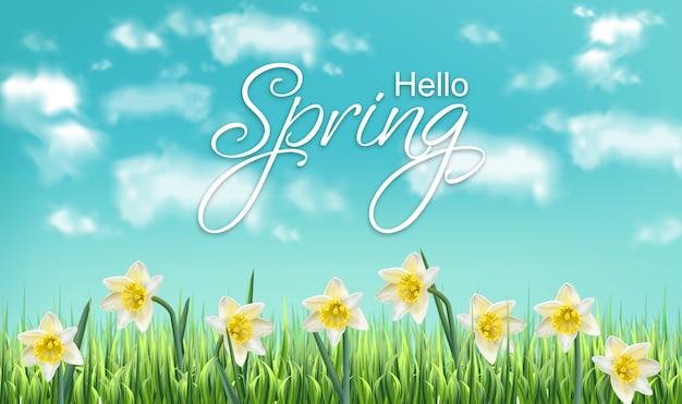 春カード水仙の花のフィールド