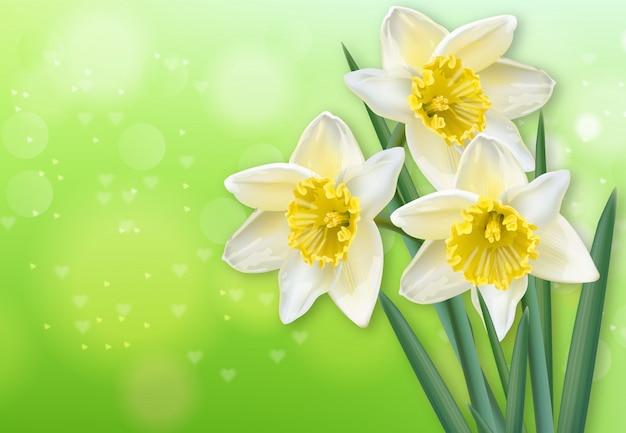 水仙の春の花