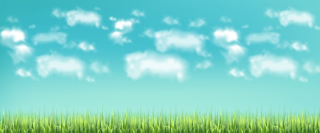 緑の牧草地と青い空