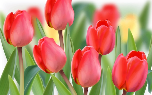 春のチューリップの花畑