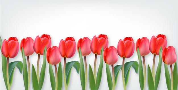 白地にピンクのチューリップの花