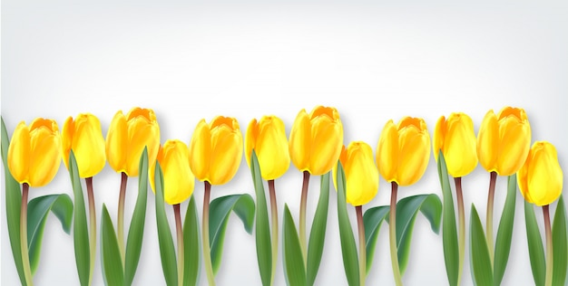 黄色いチューリップの花