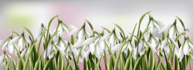 スノードロップの花の水彩画