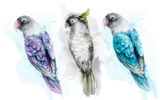 カラフルな熱帯オウム鳥の水彩画