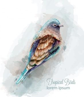Тропик красочная птица акварель