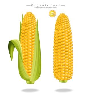 Реалистичная кукуруза кукуруза