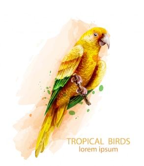 熱帯オウム黄色の鳥の水彩画